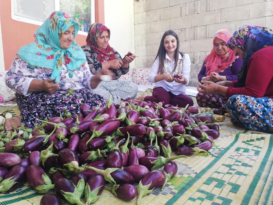 Kaymakam Büşra Uçar, yılın ilk mahsulü olan patlıcan hasadına katıldı